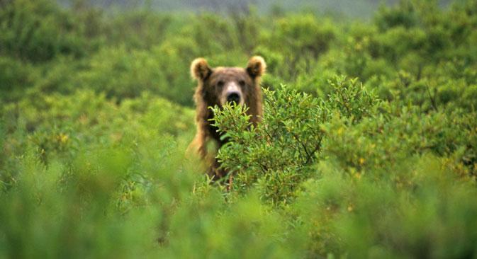 ロシアの一部地方の田舎に、人、家畜、番犬を襲う野生動物が出没している=Geo photo撮影