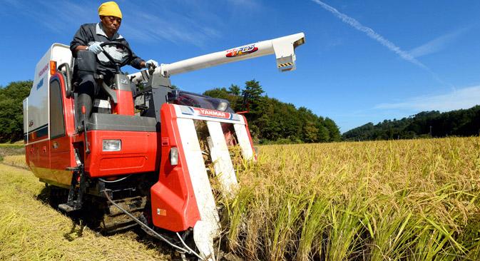 日本側はすでに、アムール州で大豆とそばの試験栽培を実施した=Getty Images/Fotobank撮影