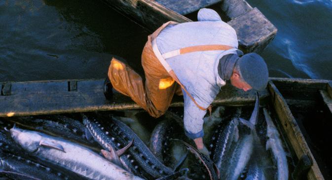 カスピ海でのチョウザメ漁。=2002年、GeorgeGeorgiou/Panos Pictures/Grinberg Agency撮影