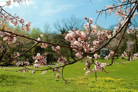 ロシア科学アカデミー中央植物園「日本庭園」=ナタリア・ススリナ撮影
