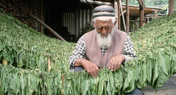 キルギス共和国でタバコの葉を乾燥させる老人=Corbis/All Over Press撮影