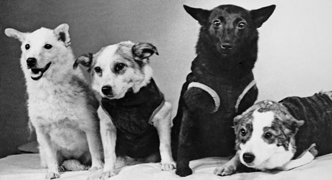 宇宙へ行ってきた犬たち、1961年。左からベルカ、ズヴョズダチカ、チェルヌーシュカ、ストレルカ=写真提供:タス通信
