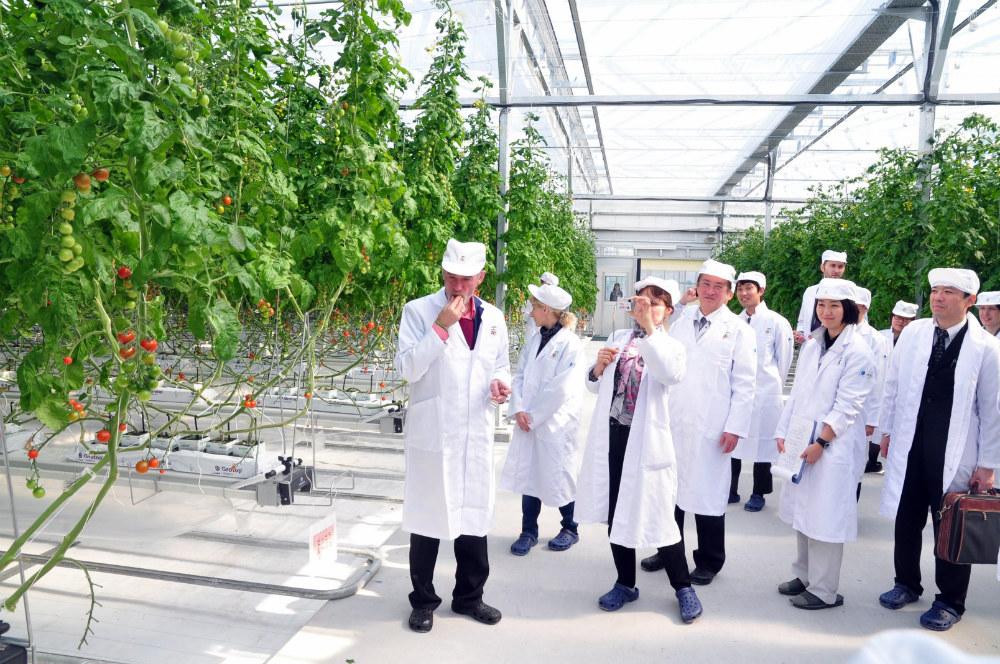 ウラジーミル・シドレンコ社長が3月14日に北海道苫小牧市の植物工場を視察している=