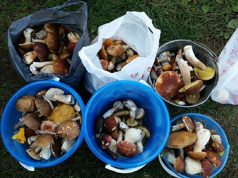 Raccolta di funghi.