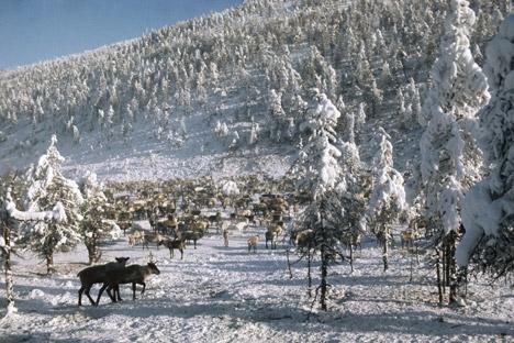 Бајковит зимски пејзаж и најладната точка на северната полутопка. Извор: РИА Новости.