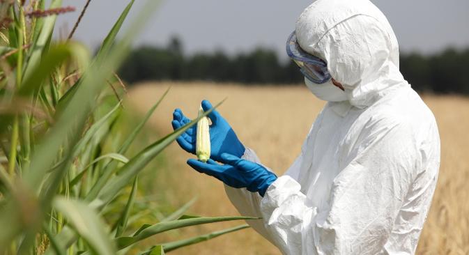 Владиниот указ би можел да го стимулира производството на домашните генетски модифицирани семиња. Извор: Shutterstock.