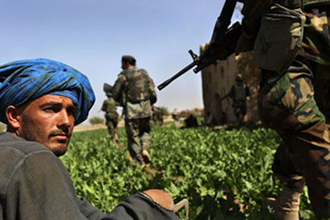 Поља мака у Авганистану. Авганистан производи 95% хероина који се прода у свету. Од њега у Русији умире 30.000 људи годишње. Извор: Getty Images / Photobank.