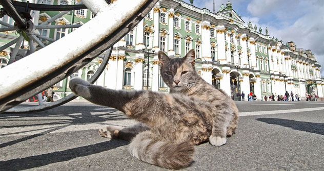 Дворски трг у Санкт Петербургу: чувар и његово радно место, музеј Ермитаж. Извор: Комерсант.