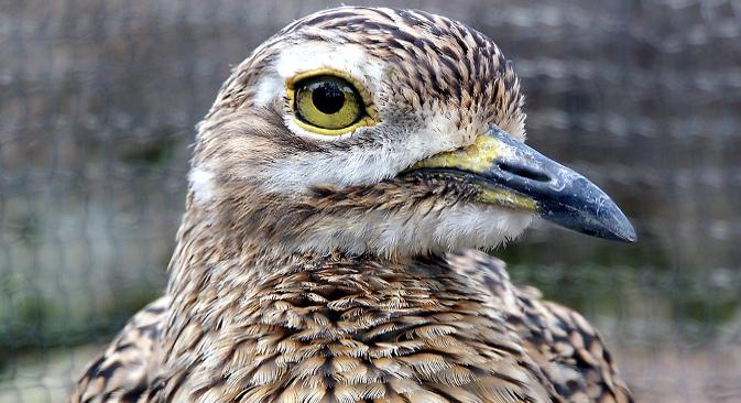 Научници предано трагају за органима магнеторецепције који би птицама могли да служе као унутрашњи компас. Доказано је да је осетљивост на магнетно поље повезана са видом. С друге стране, постоји хипотеза према којој птице у горњем делу кљуна поседују орган осетљив на магнетно поље, повезан са мозгом специјалним нервом. Извор: DeusXFlorida.