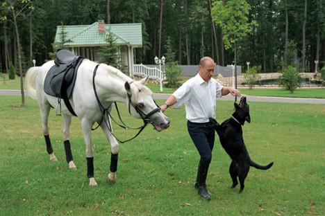 Председник Владимир Путин са једним од својих живих поклона, лабрадором Кони. Извор: ИТАР-ТАСС.