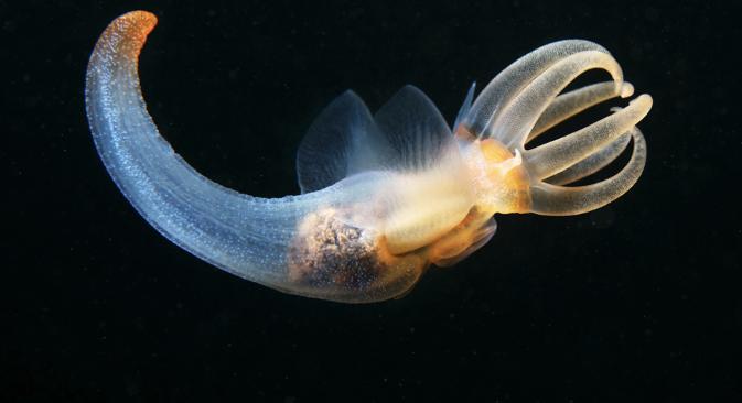 Постоји план да се током експедиције створи јединствена база фотографија и видео-материјала о природном богатству Светског океана – са хиљадама квалитетних и живописних снимака организама драгоцених за науку, и можда сасвим нових. Фотографије: Александар Семјонов.