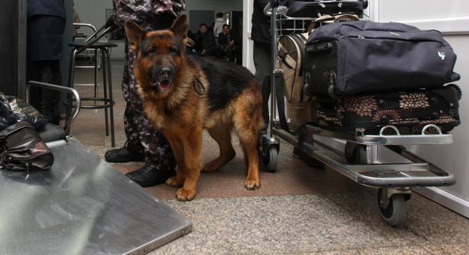 """Пас мора бити способан да за неколико секунди провери пртљаг свих путника са једног лета. Извор: РИА """"Новости""""."""