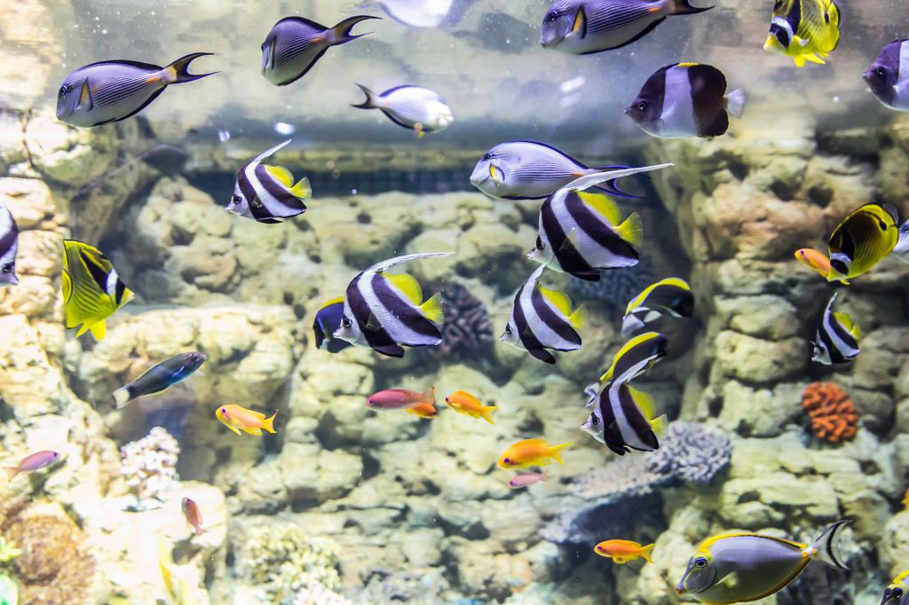 The oceanarium will become home to almost 2,300 unusual fish.